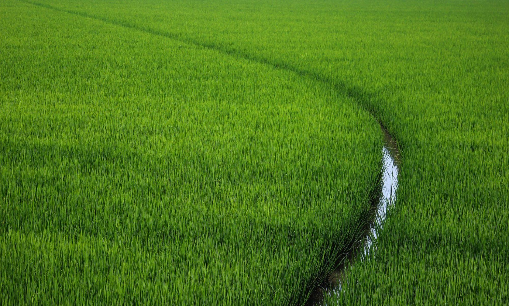 Agricola Osenga